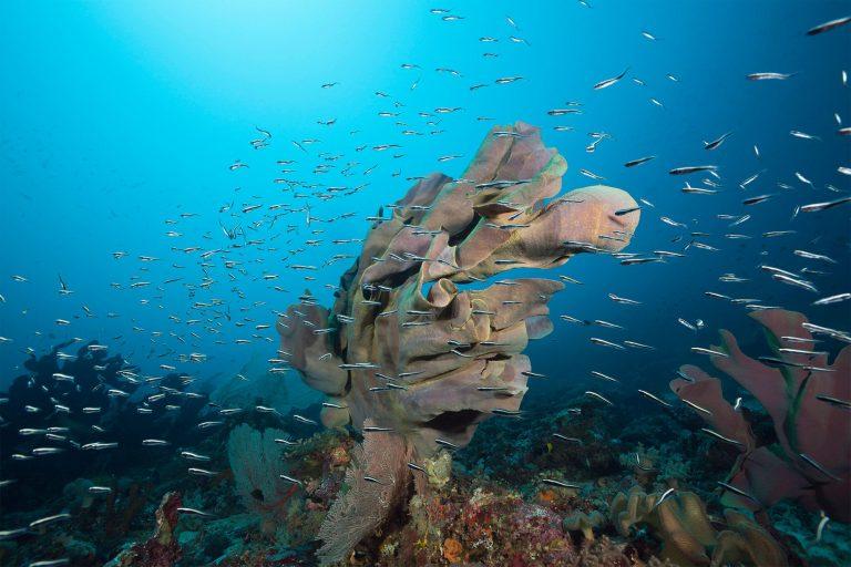 Sea Sponges of Mactan Cebu